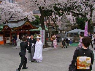 このカップルはとてもラッキーだ。去年はこの日の10日後にやっと桜が満開になった