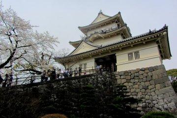 오다와라죠(小田原城)의 벚꽃