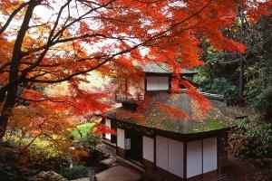 ฤดูใบไม้ร่วงในสวนซานเคเอ็น (Sankeien Garden) แห่งโยโกฮะมะ