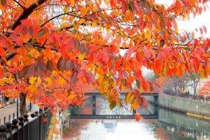 ริมแม่น้ำโอโอะคะกะวะ (Ookagawa) แห่งโยโกฮะมะ (Yokohama)