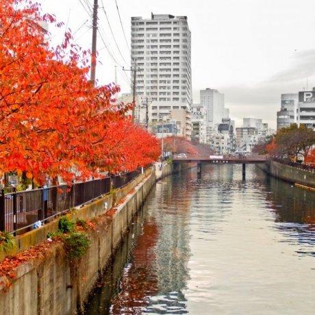 3 สุดยอดสถานที่ชมใบไม้เปลี่ยนสีในโยโกฮะมะ