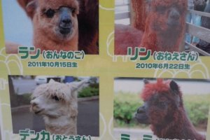 "Resident alpacas - posters are placed around the mall introducing these ""residents"""
