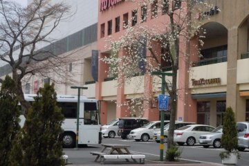 Spring blossoms at the mall, March 24th