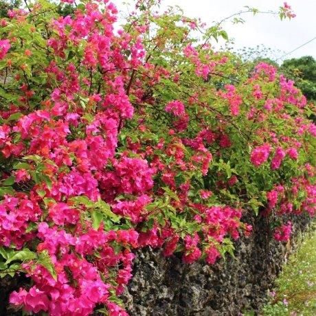 3 Điều Nhất Định Phải Làm Khi Đến Đảo Iriomote