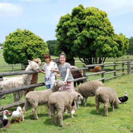Mother Bokujo Farm Experience