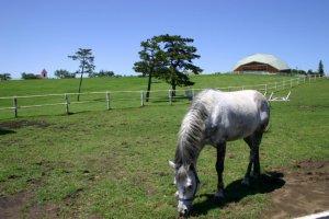 잔디밭에 있는 말