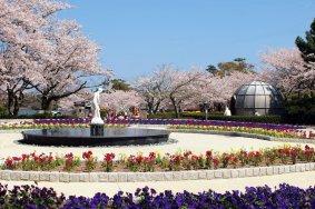 Lễ hội mùa xuân ở Yamaguchi
