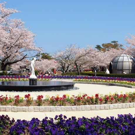 Festivals du printemps à Yamaguchi
