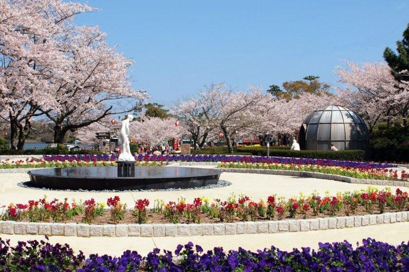 Tokiwa Koen-no-Sakura Festival