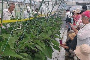 福井地野菜生産農家のハウスを見学