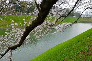 เส้นทางเดิน ชิโดะริกะฟุชิ