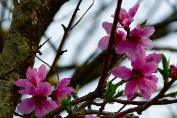 봄이 왔어요!