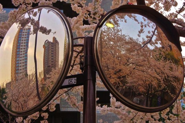 Ark Hills sakura as reflected in traffic mirror on the pavement