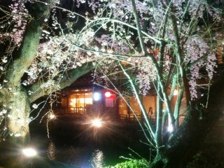 Relax at a waterside restaurant by the canal at Gion Shirakawa in Springtime