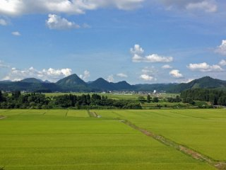 Summer: In mid-August, the rice fields around Kaneyama are lush and vibrantly green. This view, with its distinctive hills in the distance, is the first glimpse visitors get of Kaneyama when travelling north from Yamagata City.