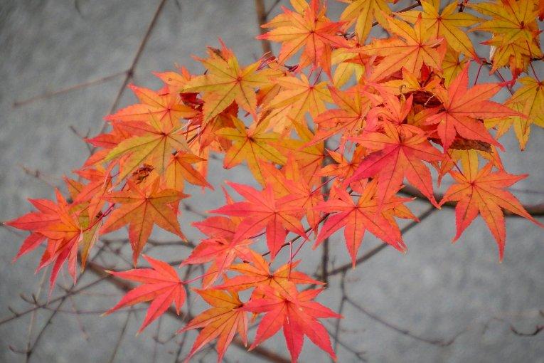 สีสันฤดูใบไม้ร่วงที่สถานี Ogawamachi
