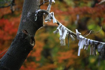 Paper fortunes tied to a tree.