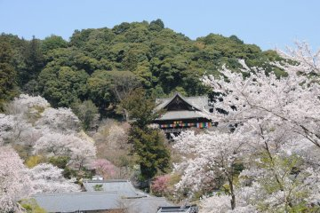Sakura period