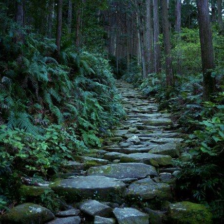 Kumano Kodo Iseji: Binshiyama and the Magose-Toge Pass