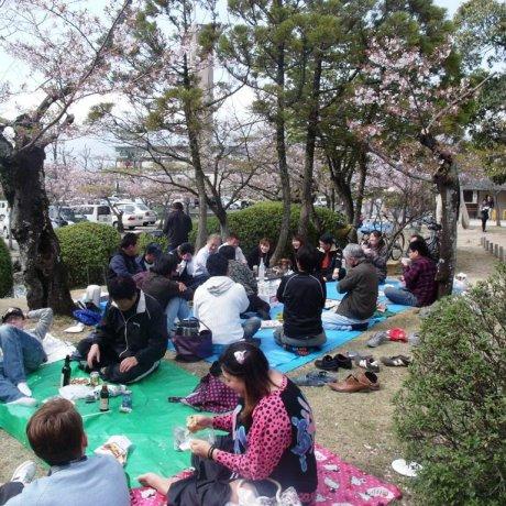 Công viên Kono, Saga
