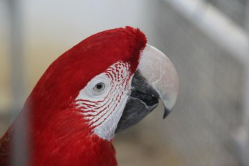 <p>Colorful parrots and hundreds of other animals await visitors to the Mini Mini Zoo and Zukeran Egg Outlet in Uruma City Okinawa.</p>