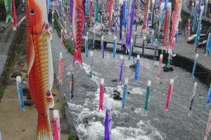 เทศกาลสายรุ้งปลาคาร์พที่ Tsuetate Onsen