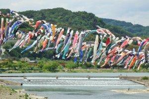 เทศกาลสายรุ้งปลาคาร์พ ณ.สะกะมิฮะระ