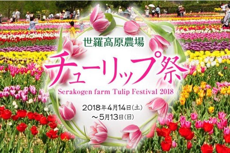 เทศกาลดอกทิวลิปที่ Serakogen Farm