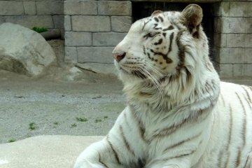 Tobu Zoo in Saitama