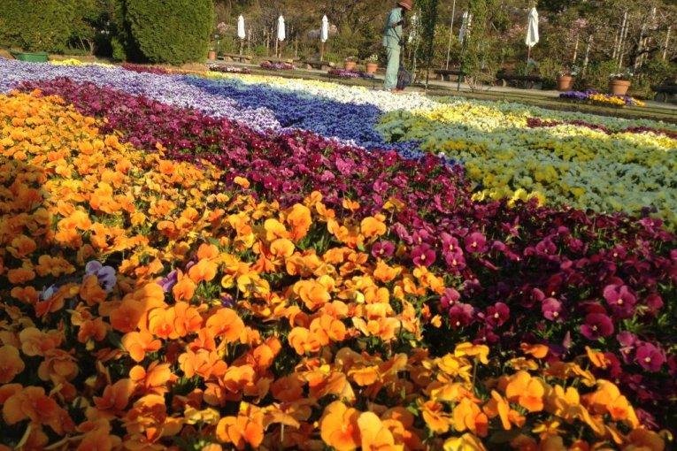 Công viên hoa Ashikaga