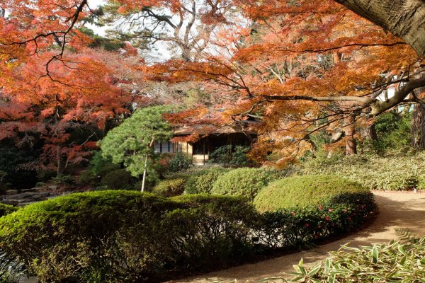 Le jardin du musée en automne