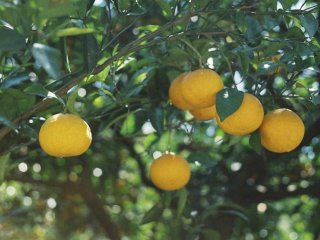 Enjoy loads of delicious citrus in the many towns you pass through on your way!