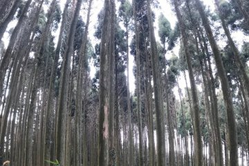 Ise Forest Trees and Shrubs