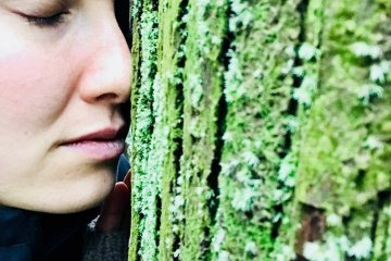 Connect with the spiritual essence of Ise Forest