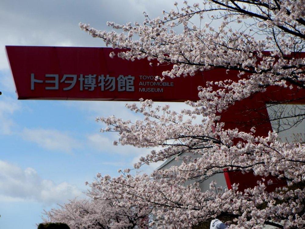 그 박물관은 벚꽃으로 둘러싸여 있다