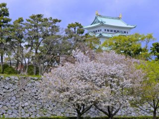 Nagoya Castle and the flowers—when culture and nature melt into eachother