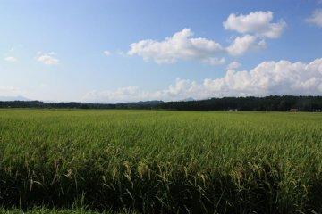 Поездка через север Японии увлекла ее подальше от городской жизни в самое сердце сельской местности.