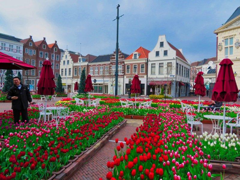 Вид из Цветочного кафе в зоне города Амстердам
