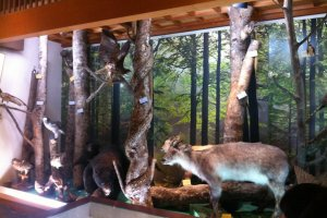 Many displays in the museum show the wildlife in the area. Here you can see some stuffed animals