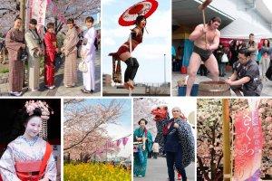 เทศกาลดอกซากุระ Bokutei Sakura-matsuri