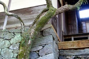 Trees in unexpected places