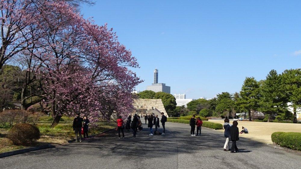 ซากหอคอยปราสาทเอโดะยืนเด่นอยู่กลางสวน