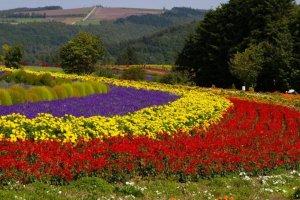 ทุ่งดอกไม้ที่ฟุระโนะ