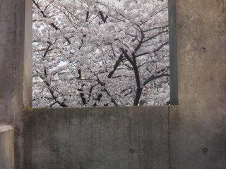Beauty through a concrete window
