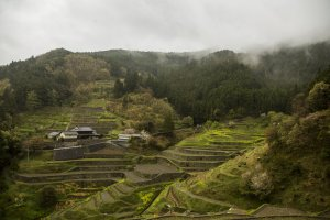 The Izumidani rice terraces surrounded by low-lying clouds