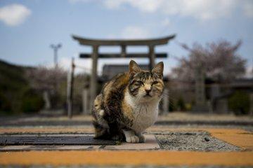 One of the many cats on Honjima