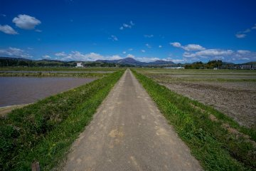 How about cycling through rice fields?