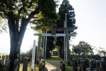 Вход в святилище: за каменными воротами - тропинка с высокими криптомериями по бокам