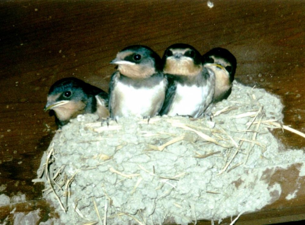 馬籠 (まごめ) と妻籠 (つまご) 間の道で見つけた雀のような鳥