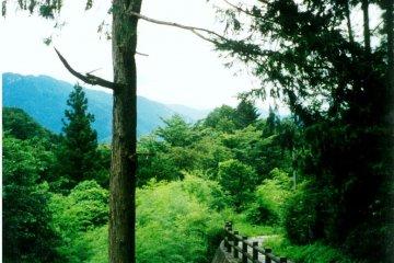 쯔마고와 마고메로 가는 지름길